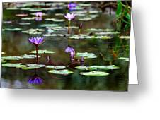 Rainy Day Lotus Flower Reflections Iv Greeting Card