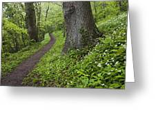 Ramsons By Path In Woods, County Louth Greeting Card