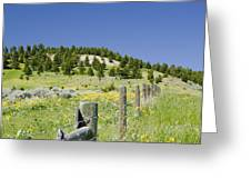 Rangeland Wild Flowers Greeting Card