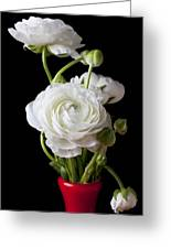 Ranunculus In Red Vase Greeting Card by Garry Gay