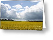 Rape Field Greeting Card
