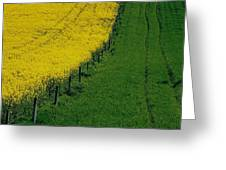 Rapeseed Growing In A Field, Ireland Greeting Card