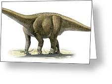 Rapetosaurus Krausei, A Prehistoric Era Greeting Card