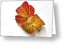 Raspberry Leaves In Autumn Greeting Card