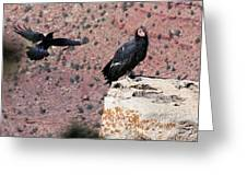 Raven Harassing Condor Greeting Card