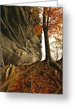 Raven Rock And Autumn Colored Beech Greeting Card