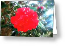 Ray Of Sun Touch Of Color Greeting Card