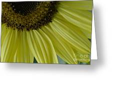Rays Of Sunshine Greeting Card
