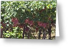 Ready To Harvest - Vineyard Greeting Card