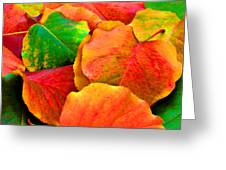 Really Colorful Fall Leaves Greeting Card