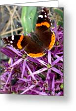 Red Admiral Butterfly Greeting Card by Maria Scarfone