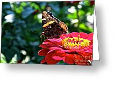 Red Admiral Probocis Greeting Card