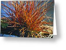 Red Air Plant Greeting Card