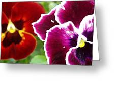 Red And Magenta Pansies Greeting Card