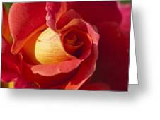 Red And Orange 2 Greeting Card