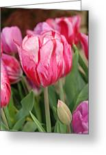 Red And Pink Tulips Greeting Card