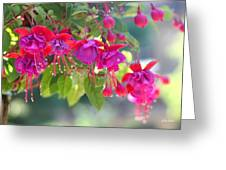 Red And Purple Fuchsias Greeting Card