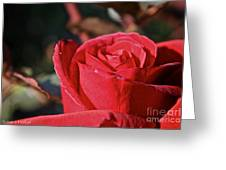 Red And Ready For Review Greeting Card
