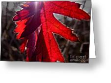 Red And Shadows Greeting Card