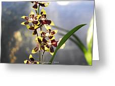 Red And White Orchid  Greeting Card