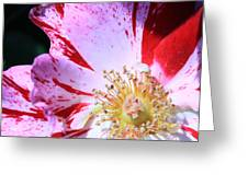 Red And White Speckled Flower Greeting Card