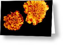 Red And Yellow Greeting Card by Barry Shaffer