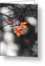 Red And Yellow Fall Leave's Closeup Greeting Card