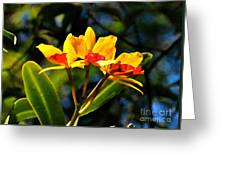 Red And Yellow Orchid Greeting Card