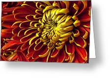 Red And Yellow Spider Mum Greeting Card by Garry Gay