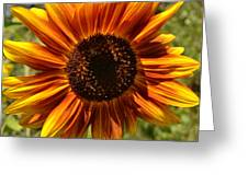 Red And Yellow Sunflower Greeting Card