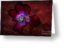 Red Anemone Greeting Card