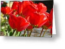Red Art Spring Tulip Flowers Floral Greeting Card