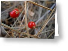 Red Asparagus Berries Greeting Card