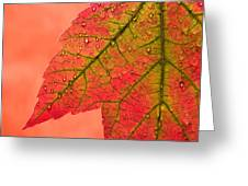 Red Autumn Greeting Card by Carol Leigh