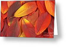 Red Autumn Leaves Pile Greeting Card