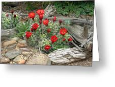 Red Barrel Cactus Greeting Card