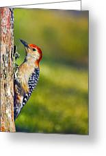 Red-bellied Tree Pecker Greeting Card by Bill Tiepelman