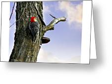 Red-bellied Woodpecker - Male Greeting Card