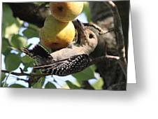Red-bellied Woodpecker - Yummy Pears Greeting Card