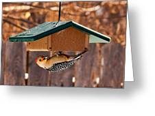 Red-bellied Woodpecker At Lunch Greeting Card