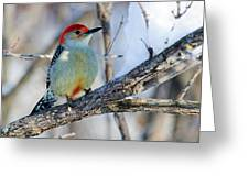 Red Bellied Woodpecker Greeting Card