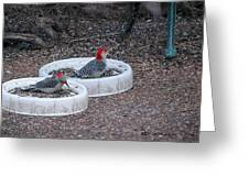 Red Bellied Woodpeckers Male And Female Greeting Card