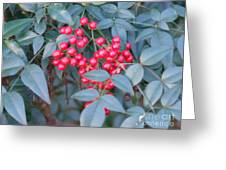 Red Berries 1 Greeting Card