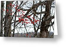 Red Berries White Sky Greeting Card