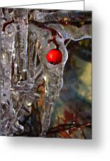 Red Berry In Icicle Greeting Card