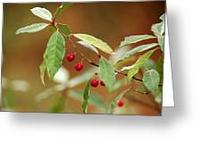 Red Bird Berries Of Fall Greeting Card