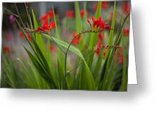 Red Blade Symmetry Greeting Card