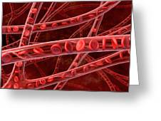 Red Blood Cells In Blood Vessels, Artwork Greeting Card