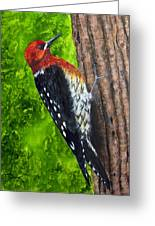 Red Breasted Sapsucker Greeting Card