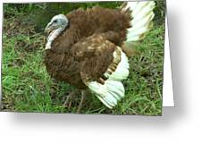 Red Burbon Turkey Greeting Card
